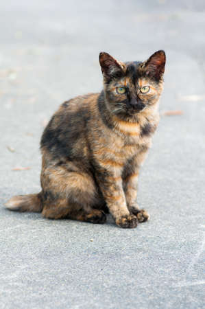 grey cat: cat sitting on grey floor looking up