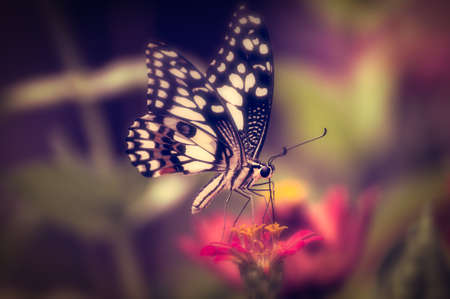 Vintage butterfly.Antique style photo of butterfly on flower Banque d'images