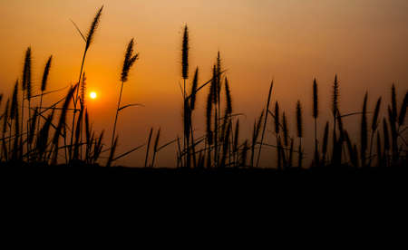 Grass flower and sunset backgrounds. Banque d'images