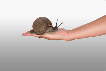secreted: Snail in hand Stock Photo