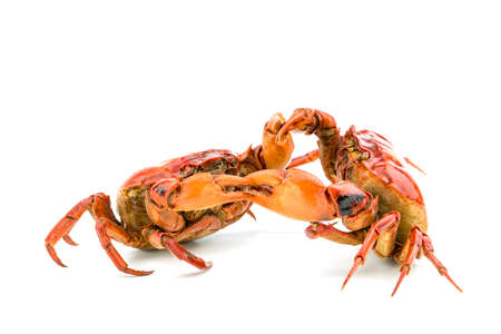 Battle of the crab isolate on white background