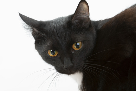 Black cat on a white background. Stock Photo