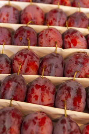 Juicy fruits of plums are spread out in even rows in the shop window.
