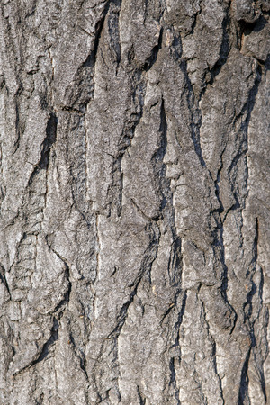 Texture of the bark of a living tree.