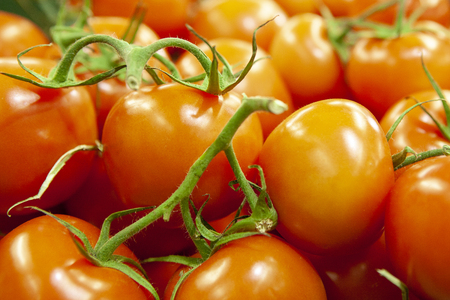 Fresh tomatoes piled on display for sale. Red juicy shiny. Shallow depth of field.
