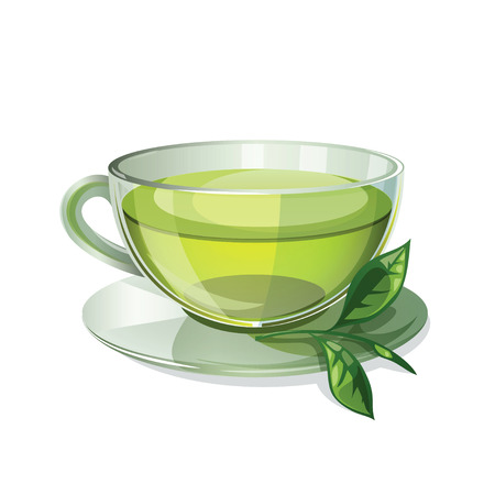 Glass cup with green tea isolated on white background. Transparent cup of green tea and a sprig of green tea. Health drink green tea in a glass cup. Isolated icon of green tea. Vector illustration. 일러스트