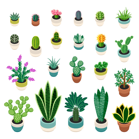 indoor plants: Big set of cactuses and succulents in pots. Cactuses and succulents isolated on white background. Indoor plants in a flat style. Vector illustration.