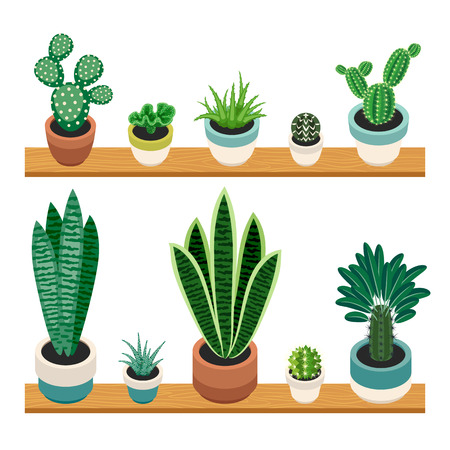 indoor plants: Set of cactuses and succulents in pots on a shelfs. Indoor plants on the shelves isolated on white background. Indoor plants in a flat style. Vector illustration.