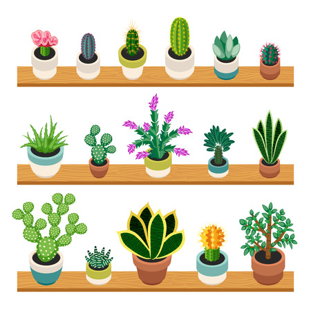 shelfs: Set of cactuses and succulents in pots on a shelfs. Indoor plants on the shelves isolated on white background. Indoor plants in a flat style. Vector illustration.