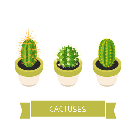 cactus cartoon: Cactuses in pots. Cactuses isolated on white background. Indoor plants in a flat style. Natural background with three cacti. Vector illustration. Illustration