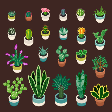 indoor garden: Big set of cactuses and succulents in pots. Cactuses and succulents isolated on brown background. Indoor plants in a flat style. Vector illustration.