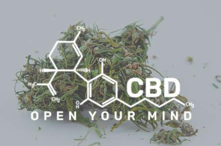 Macro photo of marijuana flower buds. Medical cannabis concept. CBD formula. Sign Open Your Mind