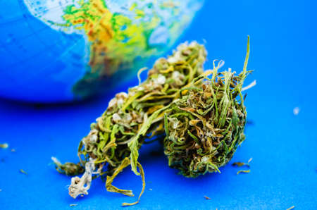 Flower bud of marijuana ir cannabis on the background of Australia on the globe. The concept of legalization
