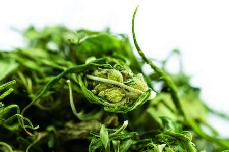 Macro photo of a large pile of buds and marijuana leaves
