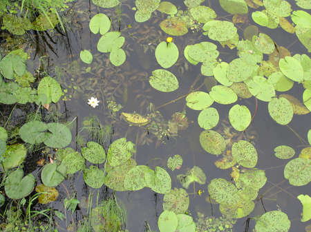 pond - 1 photo