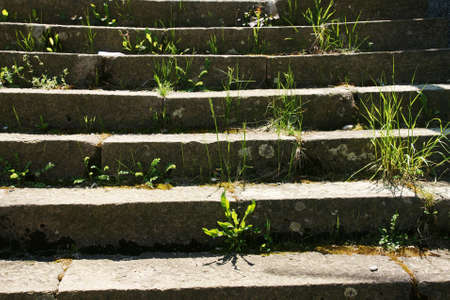 steps and staircases: stairs and grass Stock Photo