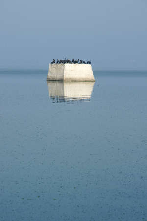 cormorants: cormorants 2