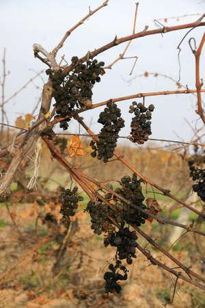 forgot: forgot grapes 16