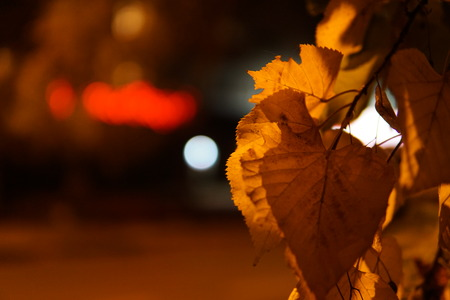 Colorful autumn leaves with city night illumination in the street