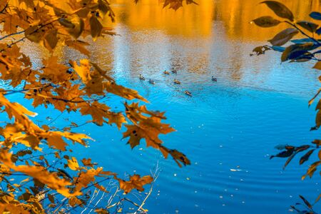 Pond with ducks in the park in warm autumn weather. Sunny autumn day Stock Photo