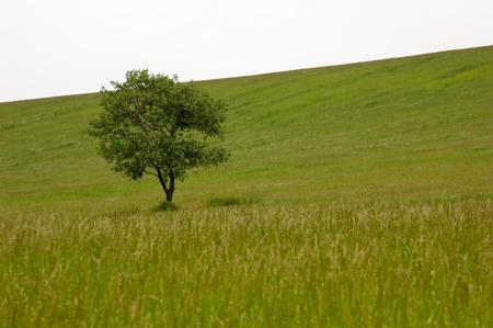 Lonely tree Stock Photo - 12673110