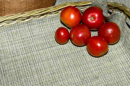 Pomodori freschi in un piatto su fondo argento. Raccolta di pomodori. Vista dall'alto