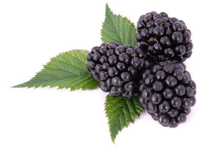 Blackberrys with Leafs on white Stock Photo - 11889588
