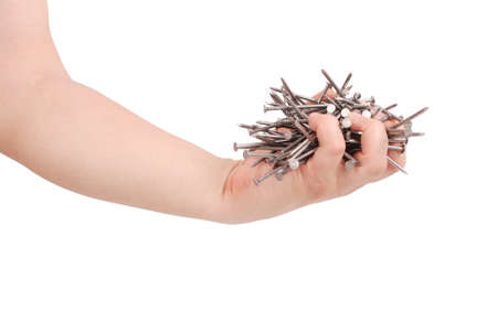timbering: Mans hand holding metal nails. Closeup with clipping path isolated on white background
