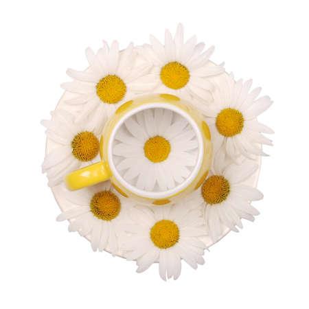 Taza de té amarilla vacía con flores de manzanilla sobre fondo blanco. Vista superior Foto de archivo