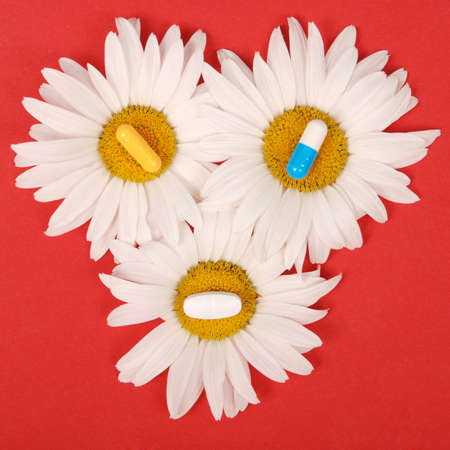 Chamomile flowers, homeopathic medicine. Tablets on yellow pollen Reklamní fotografie