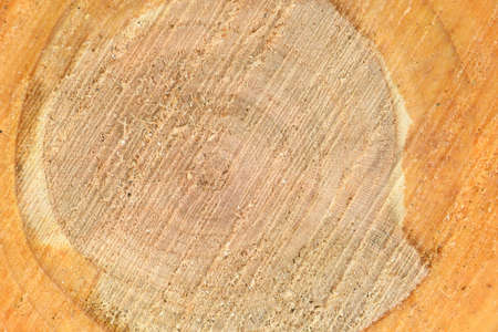 Top view of the surface of the fresh stump with annual rings closeup. For use as background. High resolution photo. Full depth of field. Stock Photo