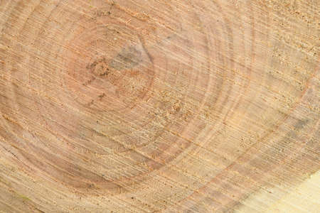 Top view of the surface of the fresh stump with annual rings closeup. For use as background. High resolution photo. Full depth of field.