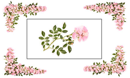 Beautiful pink rose flowers set out with a frame. Isolated on white background. High resolution photo. Full depth of field. Love photo concept. Space available for text. Archivio Fotografico