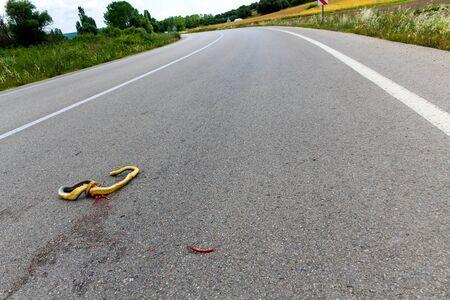 A dead snake crushed on asphalt road