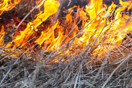 emergence: The dry dead grass actively burns down on fire and creates danger of emergence of a fire