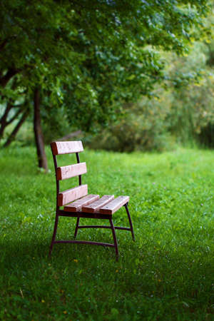 tinting: Lonely wooden bench covered with sunbeams is on the grass in shade under tree, in park in summertime. Tinting image. Concept of loneliness and waiting