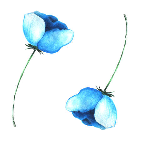 Blue flower made watercolor