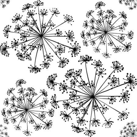 Imagen inflorescencia eneldo sobre un fondo blanco. imagen monocroma. dibujo en blanco y negro. Silueta de las plantas.