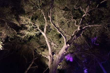 Enchanted forest - a beautifully lit majestic tree at night Stock Photo