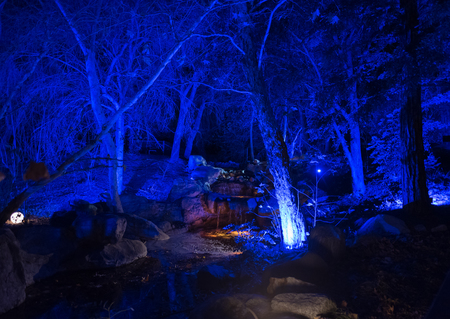 Enchanted forest - beautifully illuminated creek at night Banque d'images