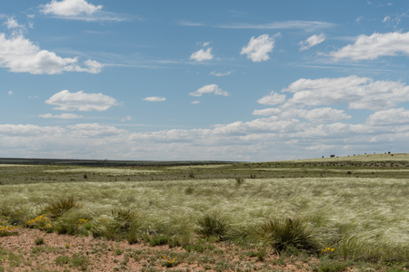 Beautiful New Mexico vista in springtime with tall grasses swept by strong wind Banco de Imagens
