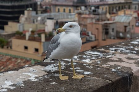 Seagull at the rooftop of the Barcelona Cathedral, Catalonia