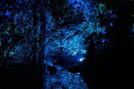 Enchanted forest of light - spooky night stream vista Stockfoto