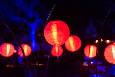 Enchanted forest of light - beautiful glowing lanterns at night