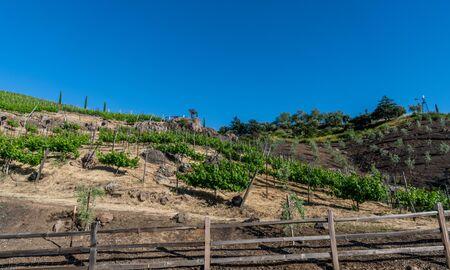 Scenic panoramic winery vista in Malibu, Southern California Banco de Imagens