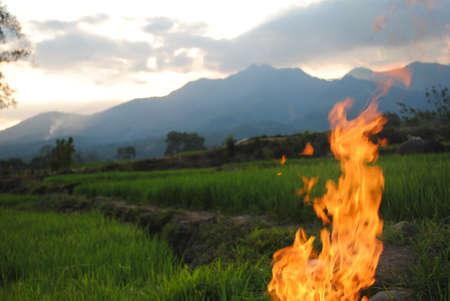 beetwen: Fire beetwen ricefield in manggarai timur
