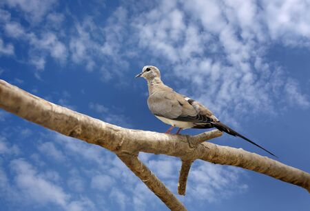 high  metabolic rate: A beautiful dove sitting on branch