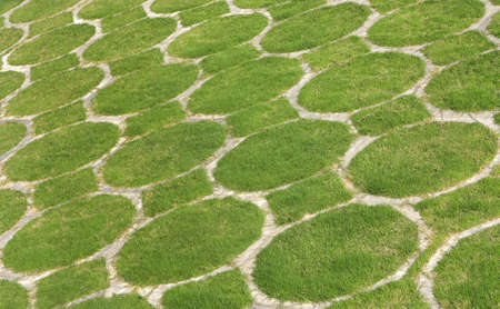 going green: A beautiful pattern of lush green grass, a photograph ideal for going green campaign