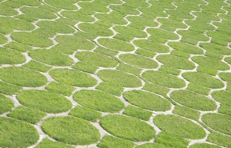 going green: Pattern with green grass , a photograph ideal for going green campaign