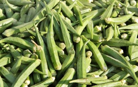 l nutrient: Fresh green lady finger